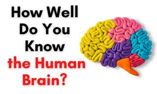 Biology Trivia: How Well Do You Know the Human Brain?