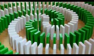 Domino Taken to the Next Level - Terrific!