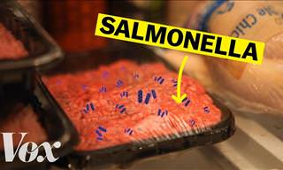 Are You Aware of The Dangers of Salmonella Poisoning?