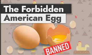 Importing European Eggs into the US is Illegal, But Why?
