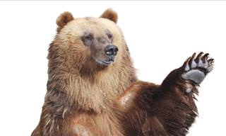 Joke: This Atheist Crosses Paths With a Bear