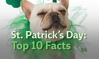St. Patrick's Day Top 10 Facts