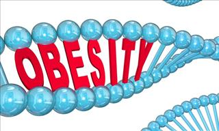 Science Lesson: What Role Do Genetics Play in Obesity?