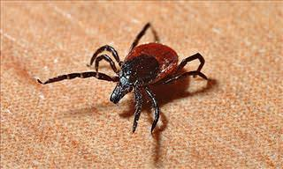 10 Things You Really Need to Know About Ticks