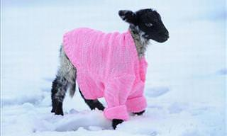Animals That Are Prepared For the Winter