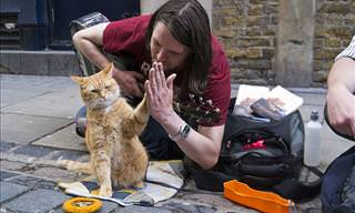 Cat Saves Man from Homelessness and Addiction