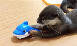 Otters Are the Clowns of the Animal World - Hilarious and Cute!
