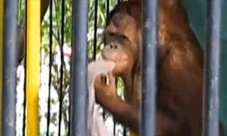 Monkey See, Monkey Steal!