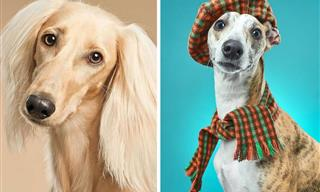 16 Playful and Heartwarming Dog Portraits