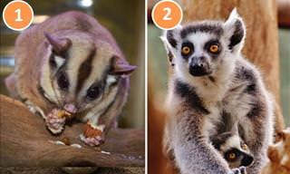 Distinguish Between 16 Commonly Confused Animal Pairs