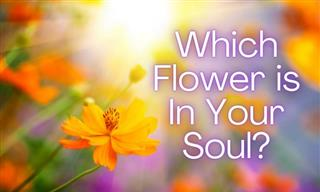 Test: What is Your Soul's Flower?