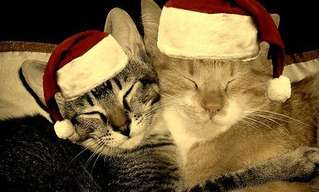 It's a Cat Christmas After All!