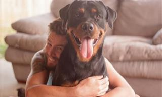 15 Sweet Dogs With the Most Cheerful and Happy Smiles