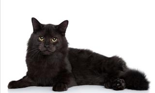 Joke: A Black Cat With a White Spot
