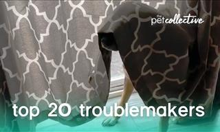 Animal Fun: 20 Adorable Trouble Makers!