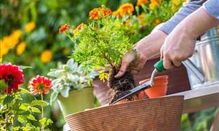 Gardening Tips: 11 Ways You May Be Messing up Your Garden