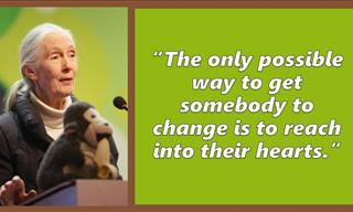 Inspiring and Uplifting Quotes From Brilliant Jane Goodall