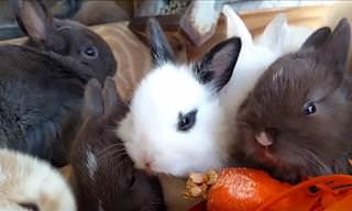 A Compilation of Funny Rabbit Videos