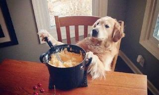 These Pictures of Funny Animals Are a Recipe for Happiness
