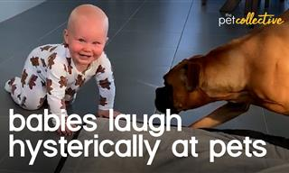 These Cute Babies Just Can't Stop Laughing at Their Dogs