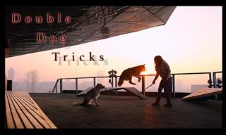 Watch These Two Dogs Do Elaborate Tricks Together