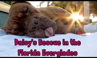 Saving Ms. Daisy - Touching!