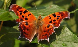 23 Rare and Stunning Butterfly Species