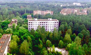 30 Years After Man, Chernobyl is Green