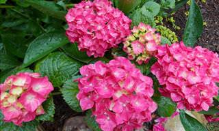 7 Stunning Flowers to Add to Your Garden