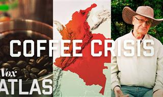 The Coffee Crisis - Could Our Favorite Drink Vanish?