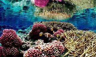 The Beautiful Colors of Coral Reefs