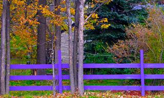 Do You Know What a Purple Fence Means?