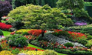 8 Breathtaking Gardens