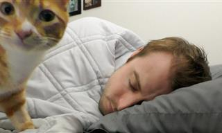 Adorable Reasons Why Cats Love Sleeping With Their Owners