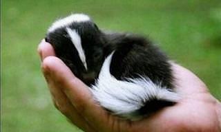 9 Adorably Cute Baby Animals