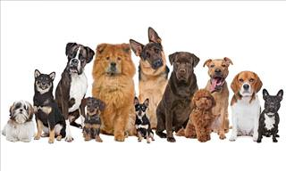 Take Our Test: What Dog Breed Are You Most Like?