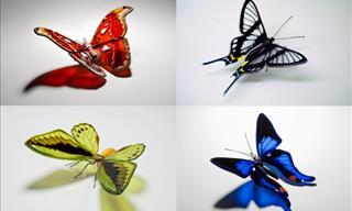 Glass Art Immortalizes 18 Stunning Endangered Butterflies