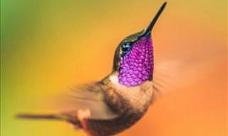 Beautiful Colored Hummingbirds