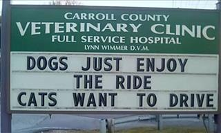 15 More Hysterical Jokes Found Outside Veterinary Clinics!