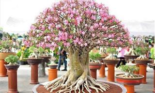 The Fascinating Garden Art of Bonsai Tree Making
