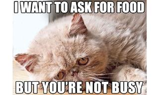 Funny: Cats Reveal the Many Problems They Endure Every Day