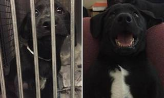 13 Photos of Animals Before & After Adoption