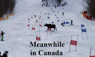 Some Things You'll Only See in Canada...