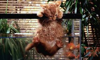 Animals in Extremely Sticky Situations!