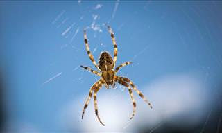 9 Ways To Make Sure No Spiders Enter Your Home