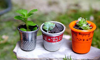 Beautiful Little Gardens You Can Decorate Your Home With
