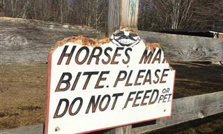 It's Impossible Not To Laugh At These Hilarious Signs!