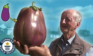 These Massive Vegetables Are Breaking Records!