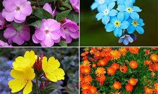 10 Flowers That Survive Well With Little Sunlight
