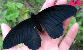 15 Beautiful All-Black Melanistic Animals